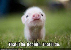 Cutest Piglet EVER!