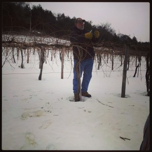 Bruce, vineyard manager, demonstrating how to prune grape vines at Wollersheim Winery in Prairie du Sac, WI.