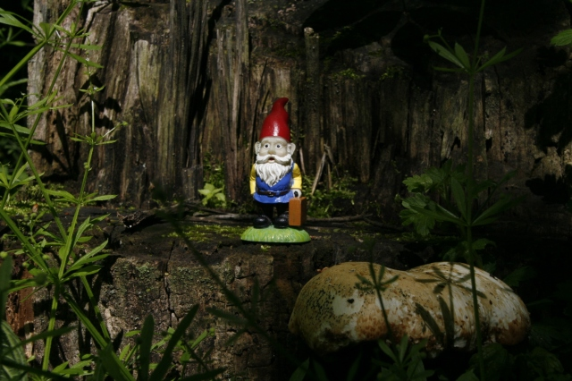 "Cedric the Roaming Gnome, ""Look at this giant shelf fungus!"""