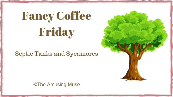 The Amusing Muse Fancy Coffee Friday: Septic Tanks and Sycamores